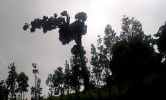 Los gigantes se inclinan con el viento, pero no se quiebran/ The giants bend with the wind, but don't break with it (vantcj1) Tags: contraluz contraste colina montaa niebla