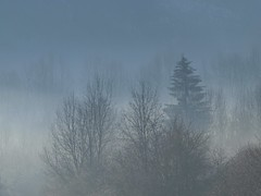 Effets de brume ** (Titole) Tags: blue trees mist fir firtree friendlychallenges thechallengefactory titole nicolefaton