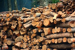 Firewood (a_ali1993) Tags: trees winter cold be firewood crosssection