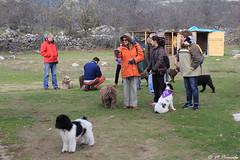 011882 - Becerril de la Sierra (M.Peinado) Tags: camping copyright espaa dog dogs animal canon spain perro perros animales kdd comunidaddemadrid 2015 perrodeagua becerrildelasierra canoneos60d 22112015 pdaesdelassierrasdeguadarramamadridyguadalajara perrosdeaguayamigos rinconanimalista noviembrede2015 kdd22112015