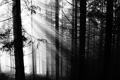 Chasing the sun (tom.junga) Tags: trees light sun mist mountains blakandwhite beauty mystery forest wow dark nice beskydy