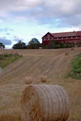 nottoden farm (5) (Parto Domani) Tags: norway farm country campagna campo noruega scandinavia turismo norvegia turisti turista turism campi turistic agricoltura turist turists agricolo coltivati coltivazione fatoria nottoden coltivato