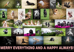 MERRY EVERYTHING AND A HAPPY ALWAYS! (Katarina Drezga) Tags: pets dogs puppy happy puppies happiness perros happynewyear dogphotography canecorso dobermann americanstaffordshireterrier petphotography dogoargentino nikkor1855mm outdoorphotography nikkor50mm18g nikond3100 nikkor55300mm4556gvr