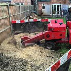 "Contracting to Tom at stump removal services yesterday, removing several large stumps #wardenstreecare <a style=""margin-left:10px; font-size:0.8em;"" href=""http://www.flickr.com/photos/137723818@N08/23846382801/"" target=""_blank"">@flickr</a>"