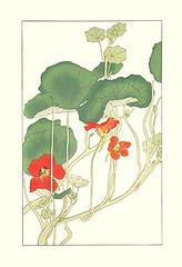 Garden nasturtium (Japanese Flower and Bird Art) Tags: flower garden nasturtium tropaeolum majus tropaeolaceae hisui sugiura nihonga woodblock print japan japanese art readercollection