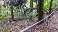 Abstieg von der Burgruine Rheingrafenstein