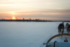 Dog Sledding (Adam Beaney) Tags: dogsledding finland arctic cold husky frozenlake