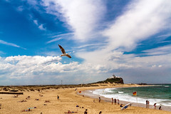 Nobbys Seagull 01 (Sterling67) Tags: seagulls ocean sea nobbys clouds sun water headland surf people sand 2470