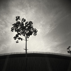 A tree near the Velodrome at the Olympic Park (Holga 120, Kodak TriX 400) (alejandro lifschitz) Tags: lifschitz rio de janeiro brazil brasil downtown urban landscape street kodak holga hc110 black white film lightroom photoshop silver efex pro epson outdoor monochrome pinhole road depth field three arbol clouds sky 2016 olympic park barra velodrome