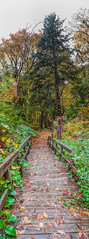 Board Walk (JMS2) Tags: nature park trees boardwalk fall autumn scenic panoramic trail scarsdale