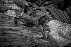 Errance Parmi les Glaces (N/B) (Frdric Fossard) Tags: nature montagne glacier neige glace srac alpinisme alpiniste glacierdutour alpes hautesavoie massifdumontblanc france ambiance atmosphre dramatique crevasse nv noiretblanc