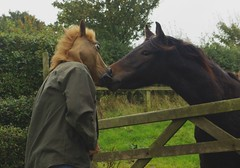 love at first sight   282/366 (horsesqueezing) Tags: 366the2016edition 3662016 day282366 8oct16 horse mask somerset gate selfie selfportrait