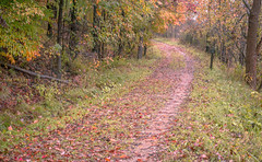 Path That Time Forgot (daddymaverick91) Tags: path trip journey akron old worn past history nature land scenery bend secluded isolate branches park trees