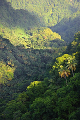 Saint Lucia, 2016 (marc_guitard) Tags: saint lucia st caribbean sea tropical island tropics travel travelling tourism tourist destination rainforest rain forest vegetation dense jungle green trees palm mountains mountainous greenery thick humid hot