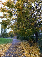 Morning walk (Ehsan 98) Tags: marienlyst park oslo norway lovlely morning walk cloudly day sky rain leafs tree plant outdoors fall autumn wind yellow orange colors fresh air grey
