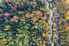 Colorful forest (Chris Herzog) Tags: ifttt 500px forest autumen fall trees colors aerial drone road river switzerland