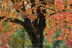 Autumn (careth@2012) Tags: leaves scenery scene scenic view fall autumn