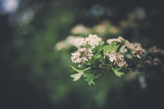 Nature (Digic-Vision) Tags: canon eos 6d sigma 35mm 14 art dof