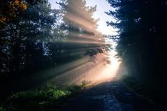 Fruška gora (Bojan Seguljev) Tags: fruskagora forest magla fog serbia srem srbija morning