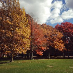 Fall on campus.