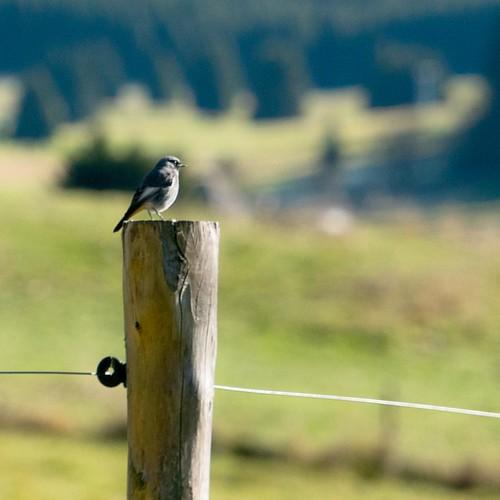 #nature #nature_seekers #naturelovers #naturephotography #nature_perfection #natureza #naturelover #natural #birdsofinstagram #birds #sunnyday #green #calm #peace #beauty #veneto #volgoveneto #italy #colors #travel #light #bauty #photooftheday #vivo_itali