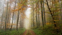 Moody (Sebo23) Tags: moody forest wald baum trees autumn autumnmood hersbstimmung herbst blatt rot red nebel fog canon6d canon24704l