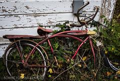20161102-BFF_8782 (Bonnie Forman-Franco) Tags: abandoned bicycle smithtown stonybrook abandonedbarn