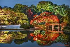 Autumn Garden (muuu34) Tags: rikugien japanese traditional garden autumn leaves pond water reflection lightup fall colors colorful bridge komagome tokyo japan 六義園 ライトアップ 紅葉 水面 反射 musashi sakazaki