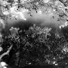 Riverside Reflections 006 (noahbw) Tags: captaindanielwrightwoods d5000 desplainesriver dof nikon abstract blackwhite blackandwhite blur branches bw depthoffield forest landscape leaves light monochrome natural noahbw reflection river shadow square summer trees water woods