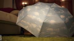 156. Adoro la lluvia / I love rain (seni1977) Tags: 365x39 seni1977 canon5d rain lluvia paraguas umbrella