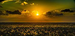 Grassland (Art Fiveone) Tags: nemuro hokkaido grassfield sunset autumn susuki   japan   landscape