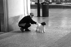 Me pill (no sabemos cmo llamarnos) Tags: streetphotography street stranger dog photoderue perro people chien woman fotourbana blancoynegro blackandwhite noiretblanc monochrome pet mascota candid robado littledoglaughednoiret