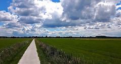 Dutch Landscape Forest (JaapCom) Tags: jaapcom landscape landed landschaft landschap clouds horizon dutchnetherlands holland hollanda natuur natural