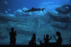 Le grand bleu, Paris - 11/08/15 (Franck Simon) Tags: paris aquarium shark requin cineaqua d700