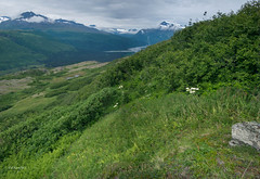 Lowe Valley (timtanner72) Tags: thompsonpass landscapephotography valdezalaska lowerivervalley akartpics