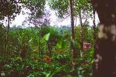 IMG_6276 (athingcalledlife) Tags: blackandwhite india green art nature rain photography colours lush coorg virajpet vsco