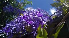 Flower  (jlau_lau) Tags: flowers blue sky plant flower fence flora day purple violet