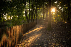 Autumn Fantasy : On The Way To The Light (Gilderic Photography) Tags: road autumn trees light sunset automne canon fence way eos woods shadows belgium belgique belgie arbres lumiere liege chemin ombres 500d