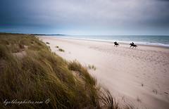 Dawn Gallop on Curracloe Beach (bob golden) Tags: autumn ireland sea horses beach sunrise dawn reserve wexford gallop ravenswood marramgrass curracloe