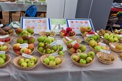 Photo of Apple varieties, Apple Festival