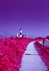 Road Leading to Montauk Lighthouse, Color Infrared (rosemaryhawkins) Tags: lighthouse olympus montauk colorinfrared om2sp aerochrome