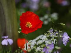 Williamson Park, Lancaster (lens buddy) Tags: park uk flowers garden flora october lancaster williamsonpark ashtonmemorial canoneosdigital pendlewitches