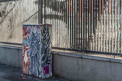 CITY FOX BY BRIDGET NI DHUINN BELCHER [BOLTON STREET]-110288