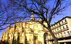 El rbol y la Catedral (Segovia) (alfonsocarlospalencia) Tags: catedral de segovia rbol ramas gtico arte infancia plaza mayor balcones pinculos grgolas maravilla sacro azul detalles luz