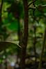 chameleon (Alberto Mugoni photography) Tags: travel wild baby india macro animal photography jungle tropical chameleon