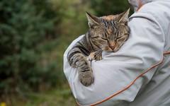 kitty (47) (Vlado Ferenčić) Tags: cats animal animals cat kitty croatia catsdogs hrvatska hrvatskozagorje zagorje nikkor357028 nikond600 klenovnik