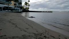 2015HawaiiPhone_14_of_82_ (1) (bikeandsail) Tags: hawaii oahu honolulu monkseal uncruise otanikaimanabeachhotel