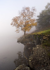 Buttermere tree in mist (alf.branch) Tags: autumn reflection water landscape lakes lakedistrict olympus cumbria zuiko buttermere refelections calmwater westcumbria cumbrialakedistrict olympusomdem1 zuiko1240mmf28pro