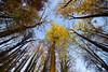 Trees in Yellow (Vladi Stoimenov) Tags: wood sky mountain tree nature yellow forest germany nikon nikkor fabulous whispers vladi 2015 d610 foresttree nikkor1424 natureselegantshots esenciadelanaturaleza