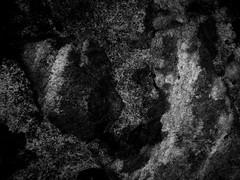 esponja. ((Re)descobrir-se.) Tags: esponja textura pedra
